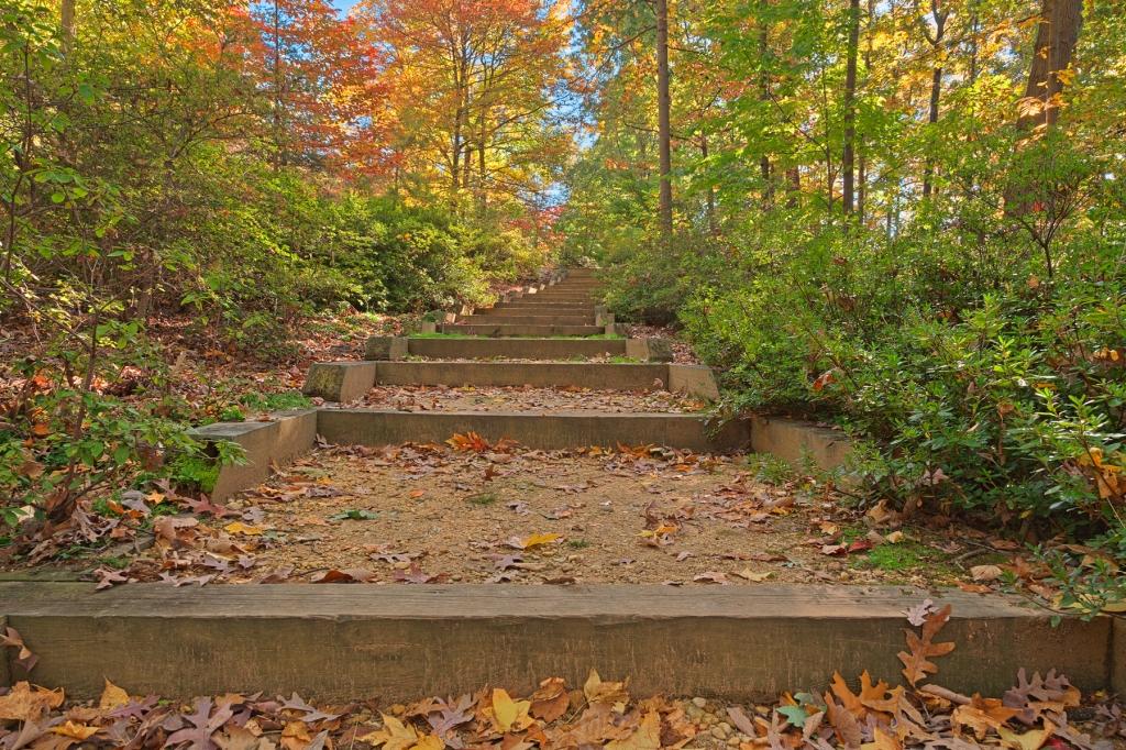 autumn-arboretum-stairway